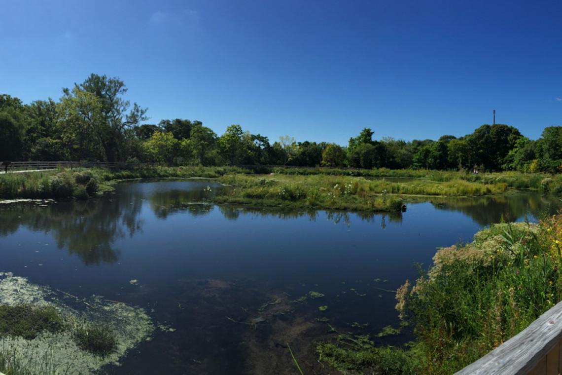 swanriver_afterlandscape